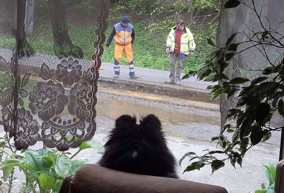 7 mai 12: réparation de la route sous l'oeil très attentif de mes shets. Rapara17