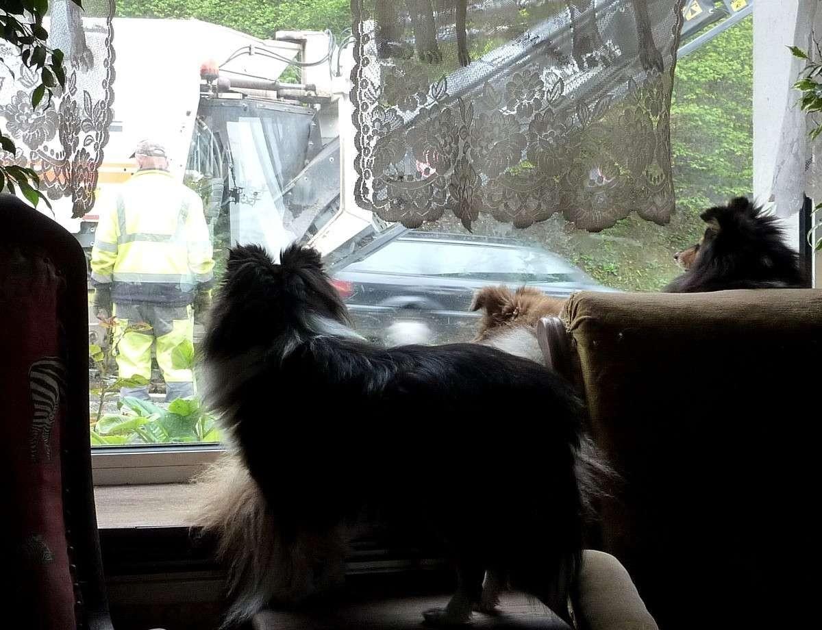 7 mai 12: réparation de la route sous l'oeil très attentif de mes shets. Rapara22