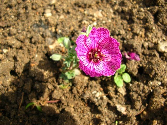Floraisons du moment Dscn6814