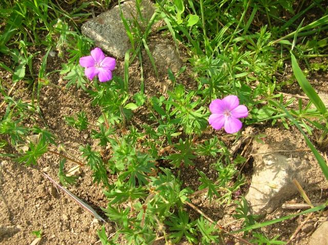 Floraisons du moment Dscn6815