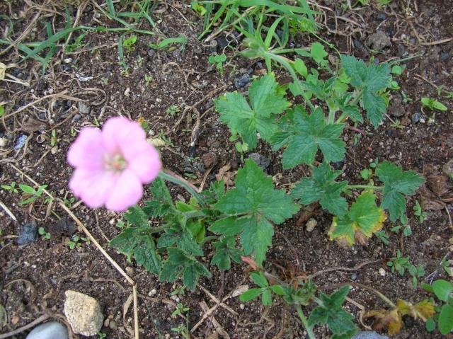 Floraisons du moment Dscn6816