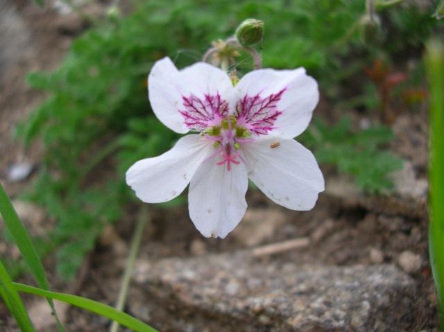 Floraisons du moment Dscn6818