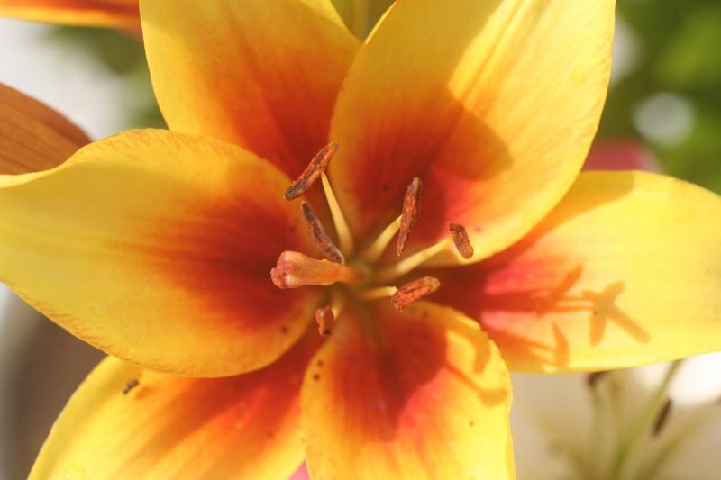 Quelques photos de fleurs 00712