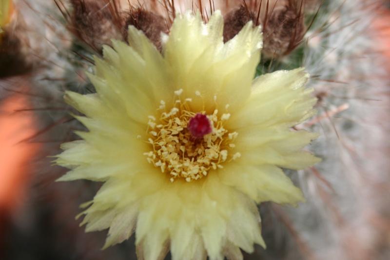 quelques fleurs 008_210