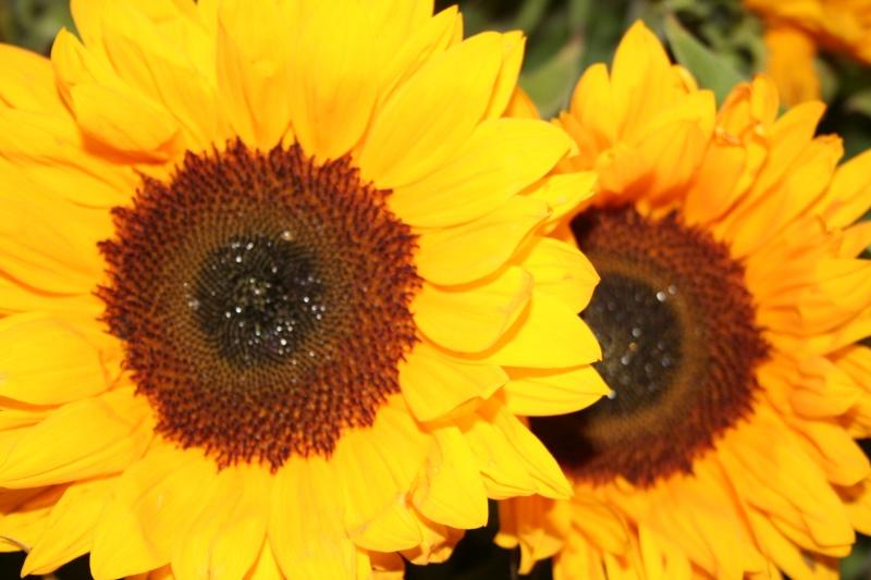 Quelques photos de fleurs 15710