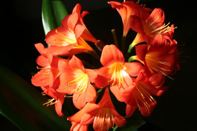 Quelques photos de fleurs Cae42812