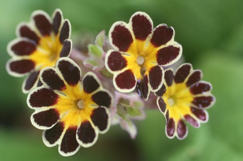 Quelques photos de fleurs Dh000310