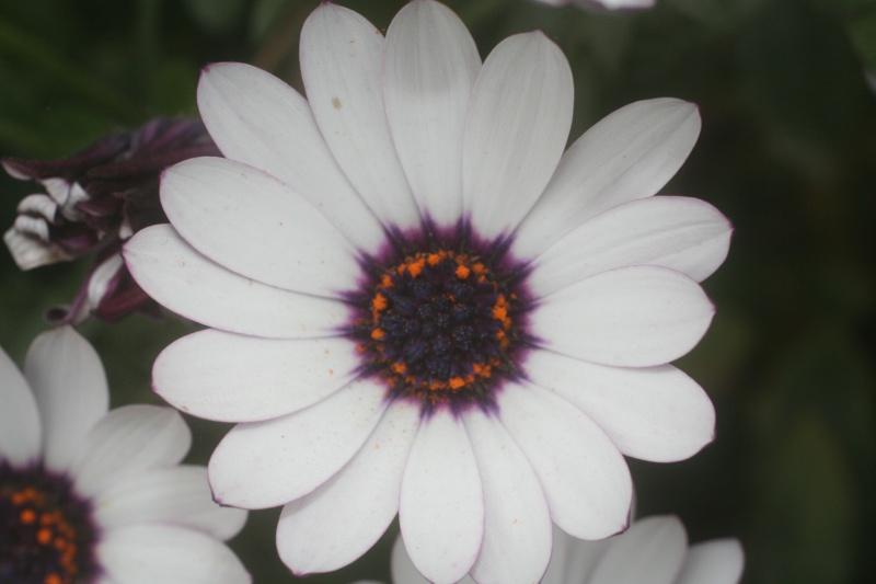 Quelques photos de fleurs Dh000311