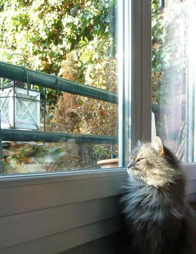Duo de chats jardiniers! - Page 19 P1060523
