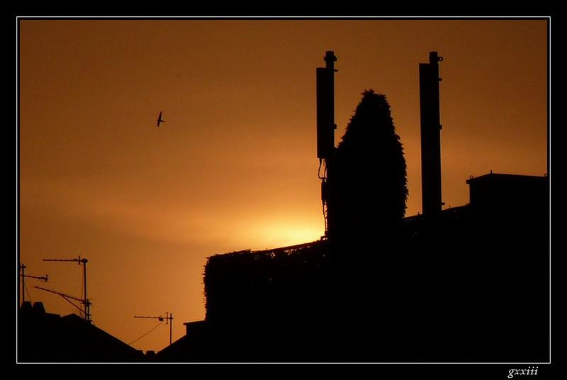 coucher de soleil - Page 5 10050820