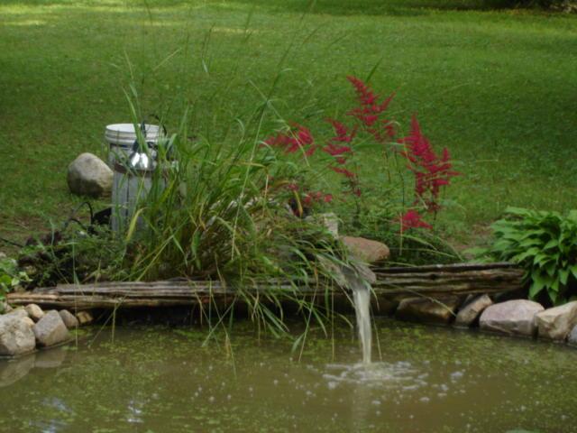 Gros changement pour le bassin Dsc05611