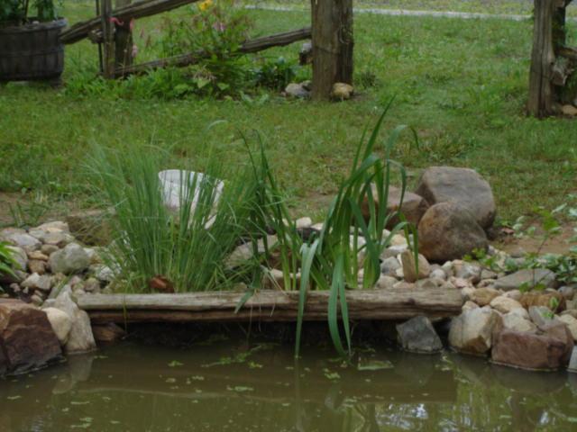 Gros changement pour le bassin Dsc05612