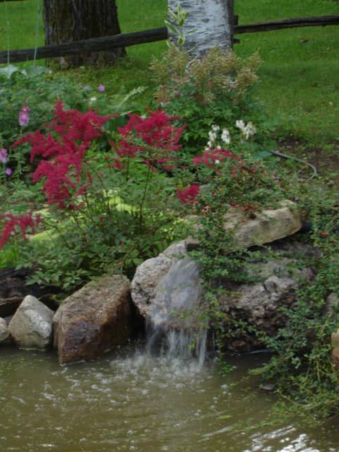 Gros changement pour le bassin Dsc05710