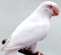 Bonjour à tous Albino10