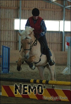 Chevaux de Dream Horse Nemo10