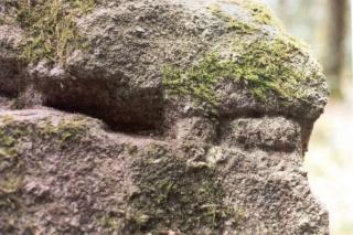 <@¿@> du 13 Avril : mur païen du Mont Ste Odile M4h_1111
