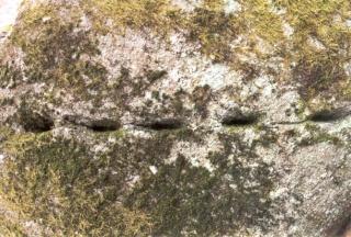 <@¿@> du 13 Avril : mur païen du Mont Ste Odile M5bs10