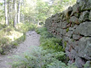 <@¿@> du 13 Avril : mur païen du Mont Ste Odile M710