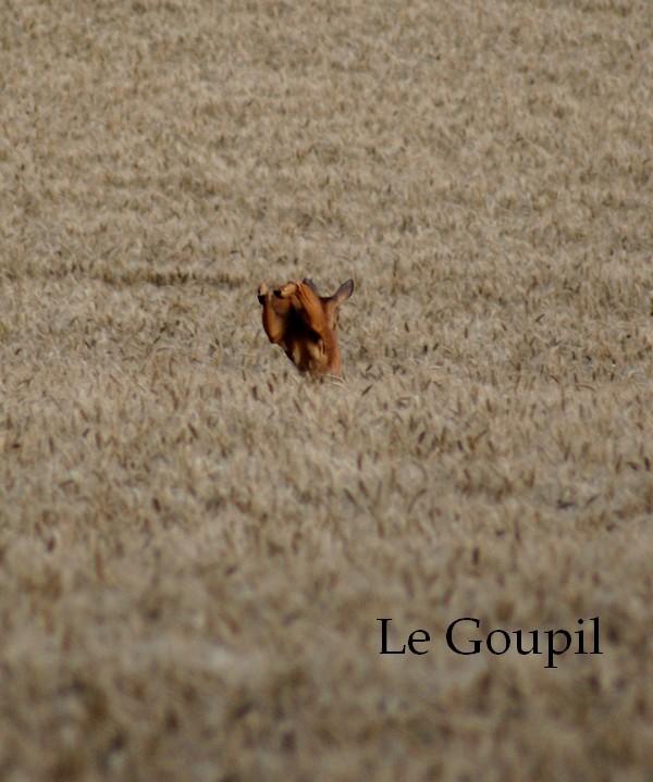 Mes sorties Chasse à l'approche - Saison 2011 / 2012 - Page 5 Dsc05510