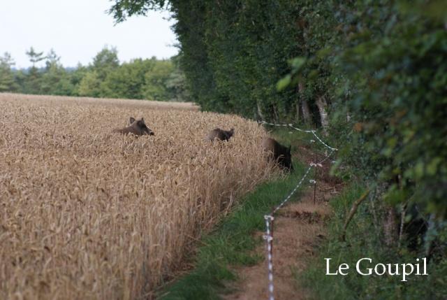 Mes sorties Chasse à l'approche - Saison 2011 / 2012 - Page 5 Dsc05519