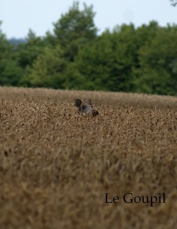 Mes sorties Chasse à l'approche - Saison 2011 / 2012 - Page 5 Dsc05520