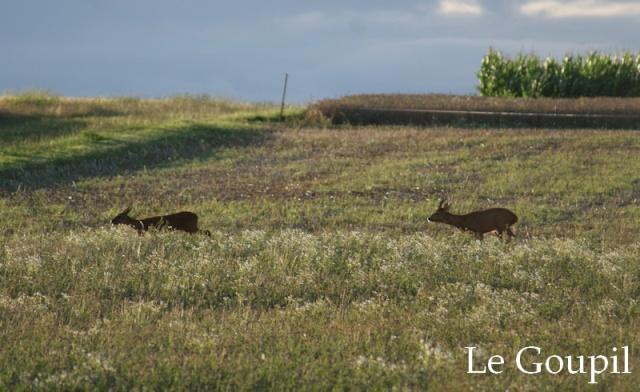 Mes sorties Chasse à l'approche - Saison 2011 / 2012 - Page 6 Dsc05524