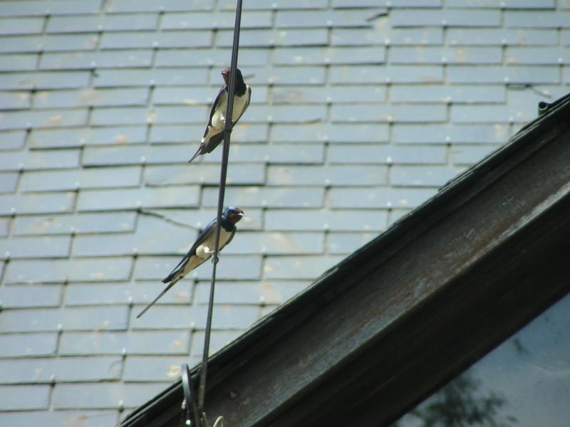 La nature autour de chez vous Pict0039