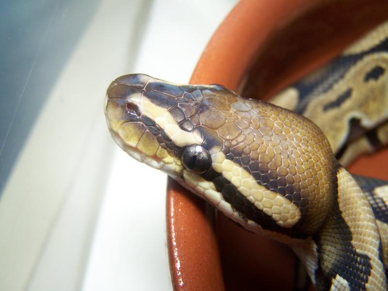mon python Photo_75