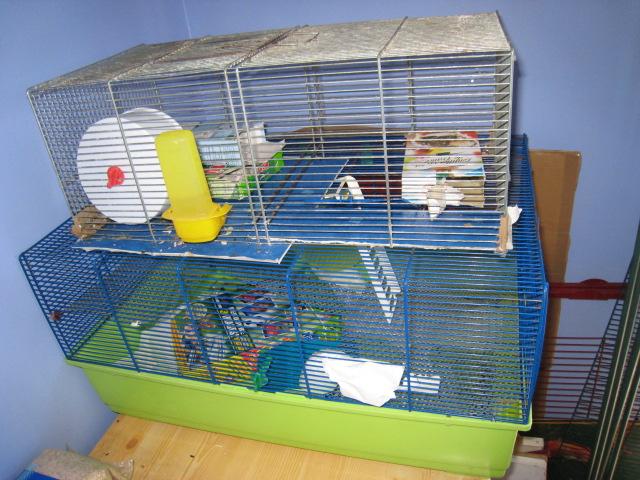 Flippy hamster campbelle gris - Page 2 18_jui14