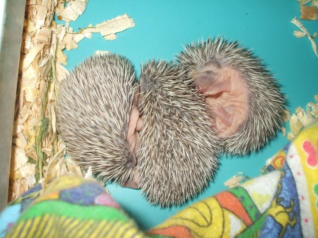 les bébés de Mousseline et Smirnoff 11_jou10