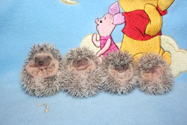 Des nouveaux bébés !(Les dalton) - Page 2 2_sema10