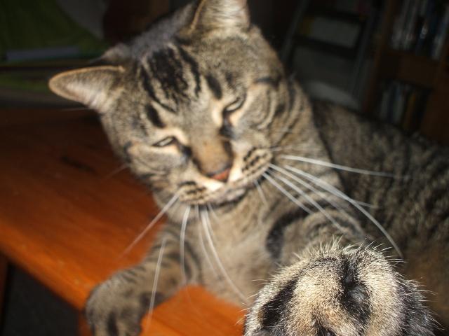 Mon nouveau chaton (photos du 12 juillet) 3_5_mo10