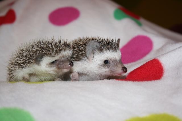 Suki et son amie! 4_5_se11