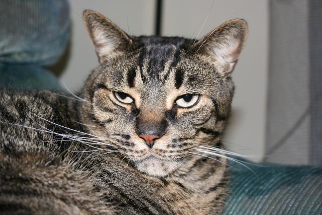 Mon nouveau chaton (photos du 12 juillet) Avril_25