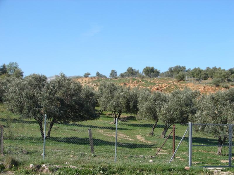 L'Andalousie Dsc03828