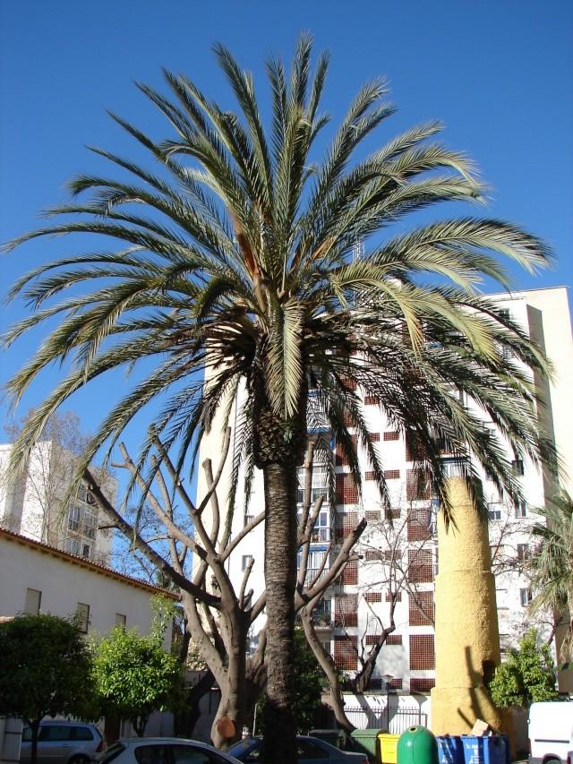 L'Andalousie Dsc03834