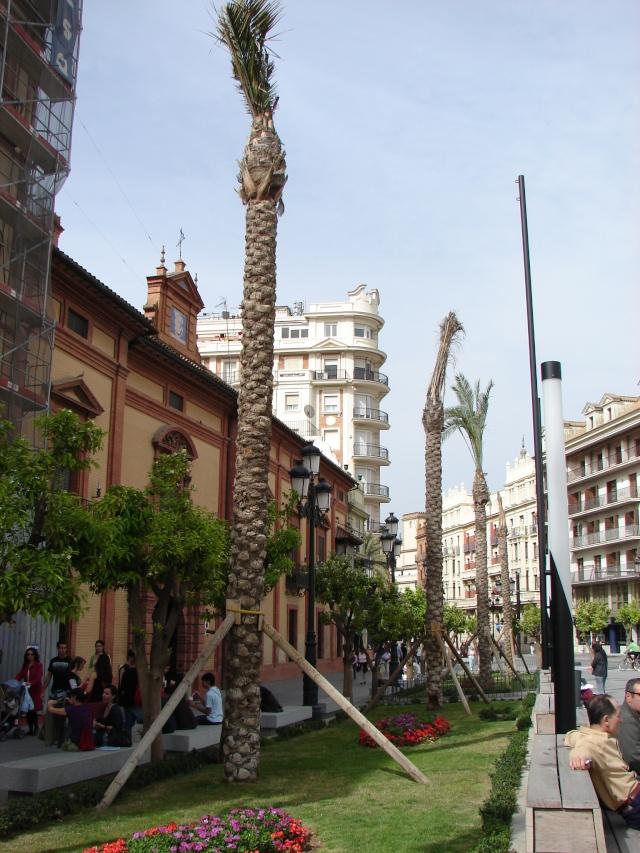 L'Andalousie Dsc04215