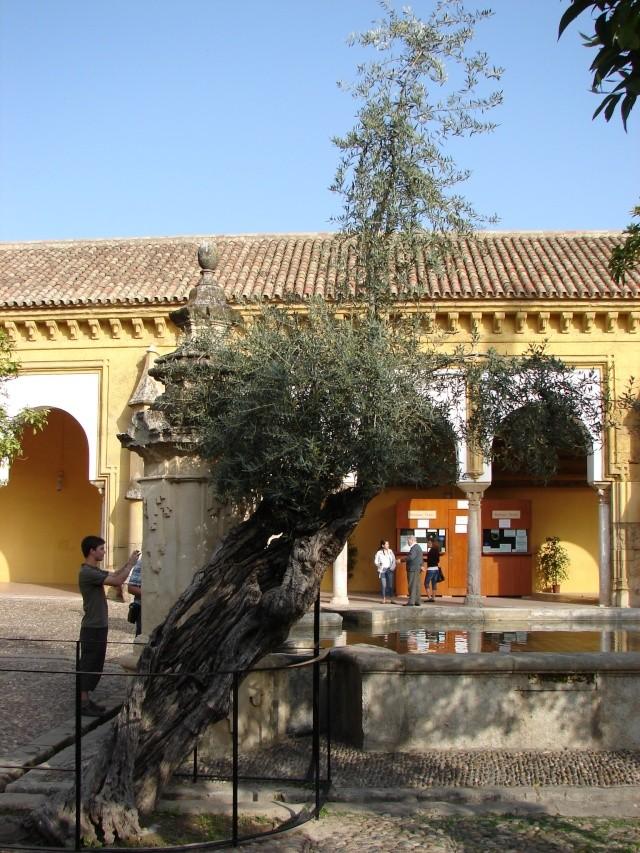 L'Andalousie Dsc04222