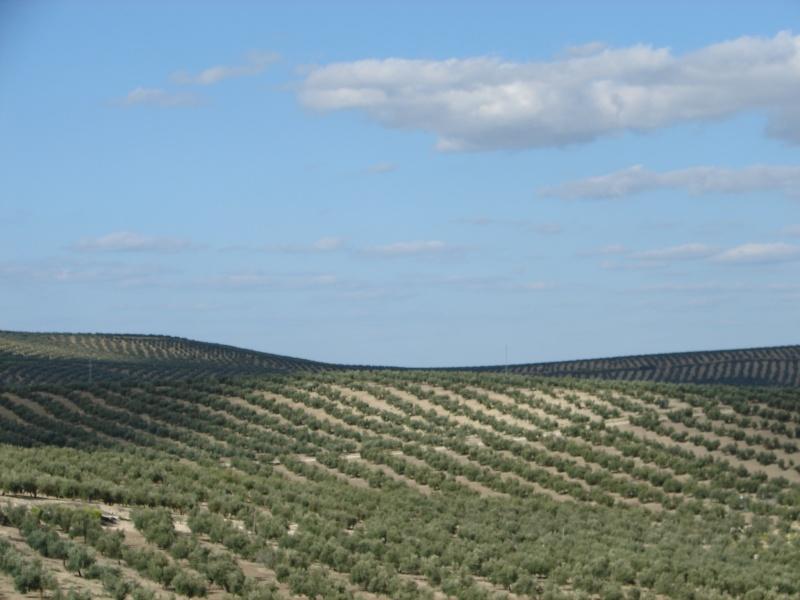 L'Andalousie Dsc04225