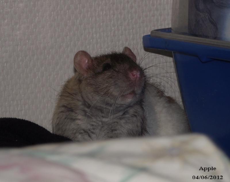 Suivi des ratous d'Iridis - Page 3 Dscf1810