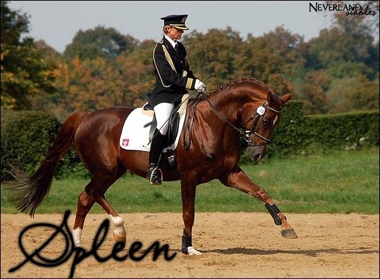 Chevaux de propriétaires [11 chevaux] Spleen11