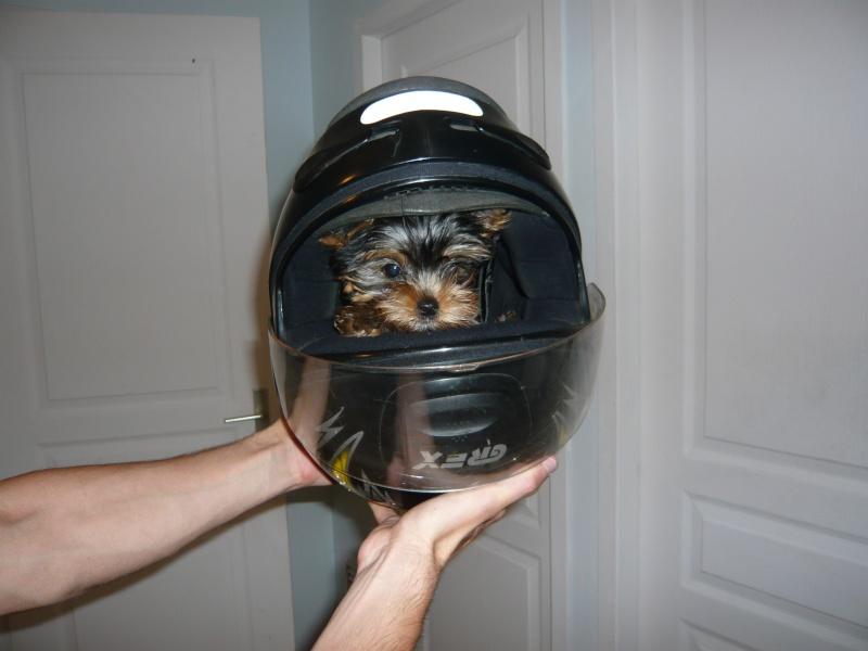 le casque du chien..... P1020011