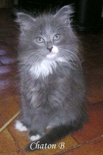 1- Thème : les chatons Nfo_b11