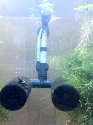 Quelques photos de mes crevettes Img_0720