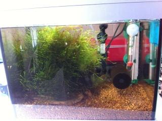 Quelques photos de mes crevettes Img_0721