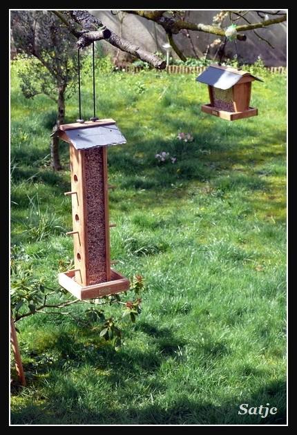 Des petits oiseaux, mais je ne sais pas ce que c'est P1000711