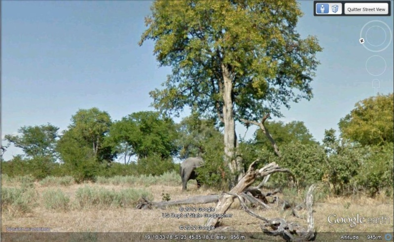 STREET VIEW : Les animaux - Page 7 Elepha10