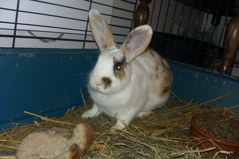 Urgent 9 bébés lapins à donner né le 25/12/2011 Imag0023