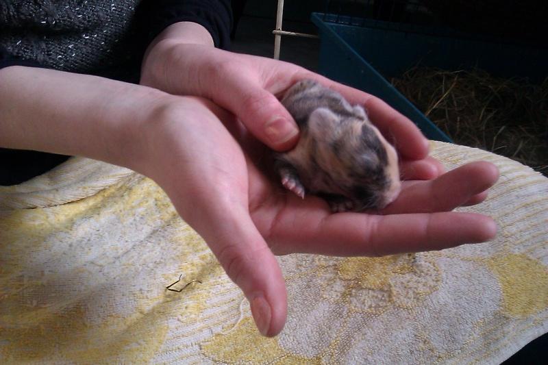 Urgent 9 bébés lapins à donner né le 25/12/2011 Imag0029
