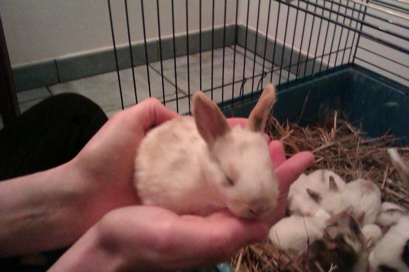 Urgent 9 bébés lapins à donner né le 25/12/2011 Imag0113